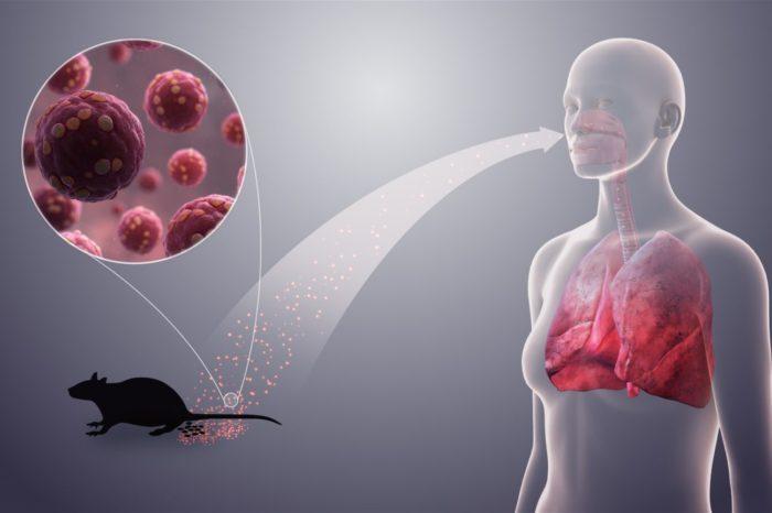 Regjistrohet viktima e parë nga virusi më i ri në Kinë: Ja çfarë duhet të dini rreth Hantavirusit